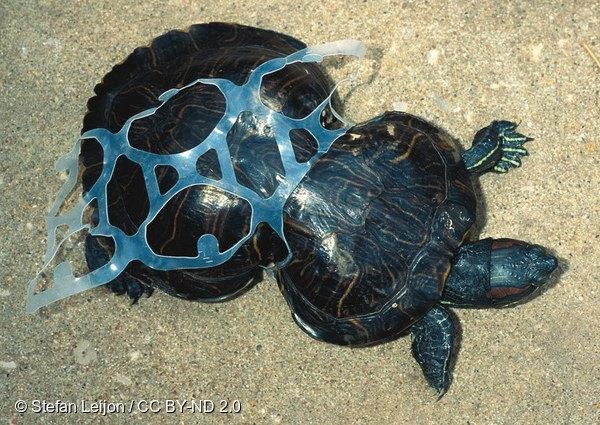 マイクロ プラスチック 問題